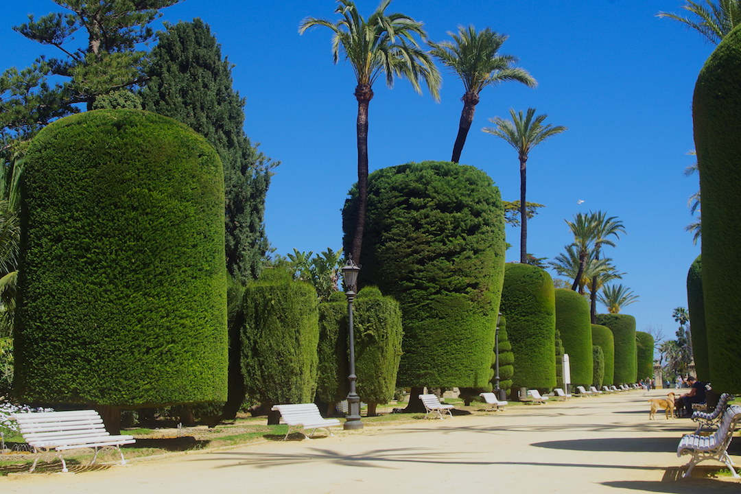 A picture of fancy trees in Park Genoves in Cadiz