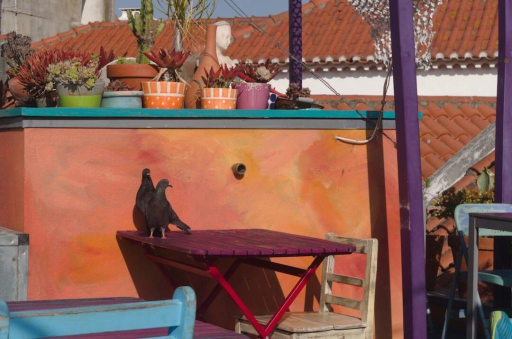 restauracja na dachu w Cascais